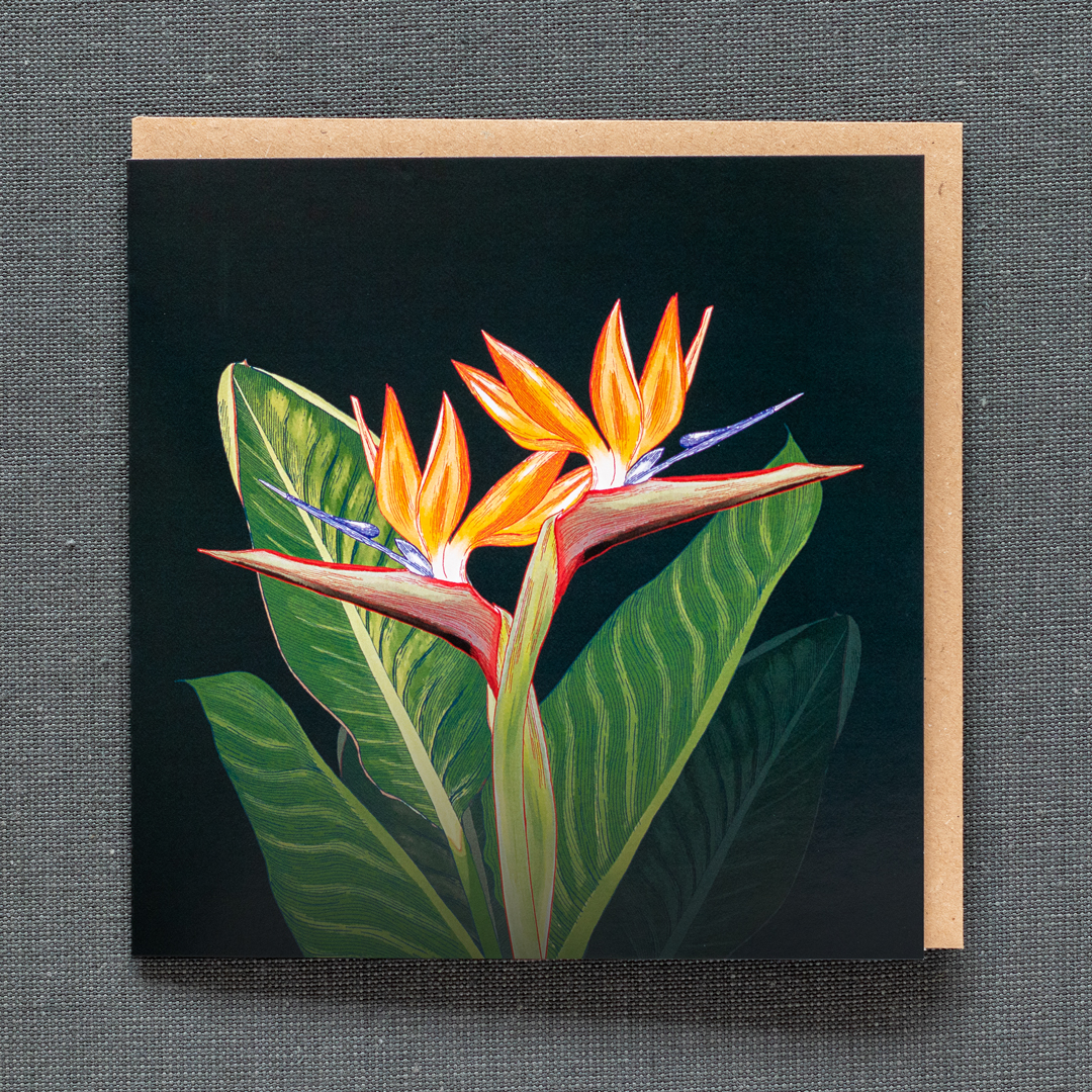Photos of a greeting card featuring Strelitzia flowers and leaves on a dark background
